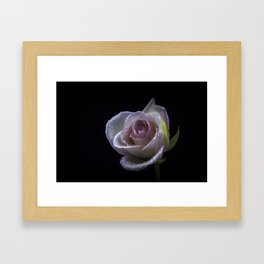 flower photography by Carlos Quintero Framed Art Print