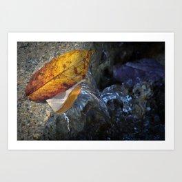 Leaves and Flowing Water Art Print