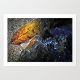 Leaves and Flowing Water Art Print
