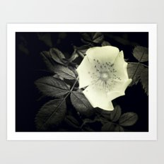 Black and White Flower Art Print