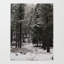 Carol Highsmith - Snow Covered Trees Poster