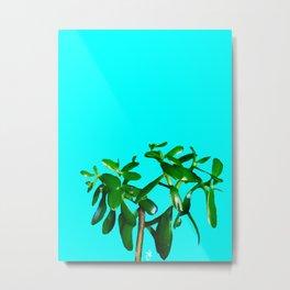 Good Luck Succulent Tree on Sky Blue Metal Print