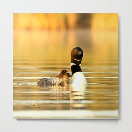 A mid morning summer's dream Metal Print