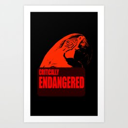 Critically Endangered Blue-throated Macaw Art Print