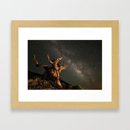Milky Way over an Ancient Bristlecone Pine  Framed Art Print