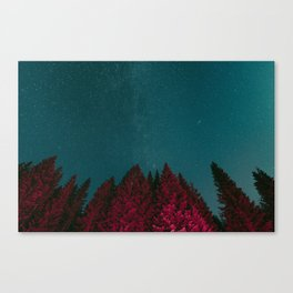 Stars and Pines Canvas Print