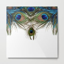 BLUE-GREEN PEACOCK FEATHERS WHITE ART Metal Print