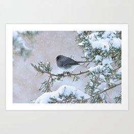 Snow Day Junco Art Print