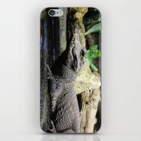 crocodile iPhone & iPod Skins featuring Crocodile by Falko Follert Art-FF77