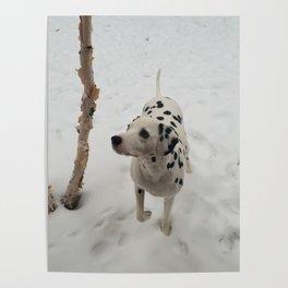 White Birch Dandy Poster