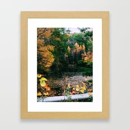 Connecticut Foliage Framed Art Print