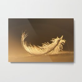 Feather by sunset Metal Print