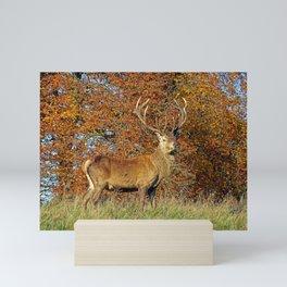 Red Deer Stag Mini Art Print