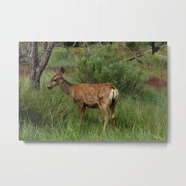 Breakfast At Mesa Verde Metal Print
