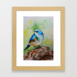 Colorful birdie Framed Art Print