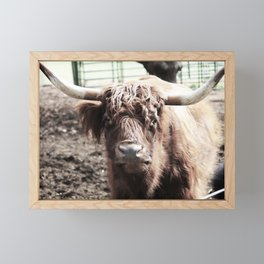 Longhorn Framed Mini Art Print
