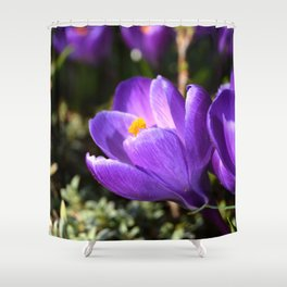 Purple Love Shower Curtain
