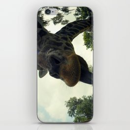 Giraffes are Silly. iPhone Skin