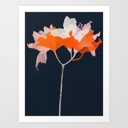 lily 20 Art Print
