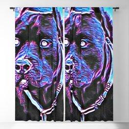 Pit Bull Models: Khan 02-03 Blackout Curtain