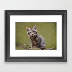 Scottish Wildcat Kitten Framed Art Print