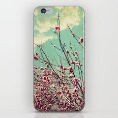 Pink Lapacho Tree iPhone & iPod Skin