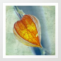 Physalis square Art Print