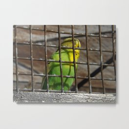 As Free As A Caged Bird Metal Print