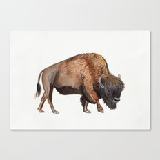 Little Watercolour Bison Drawing Canvas Print