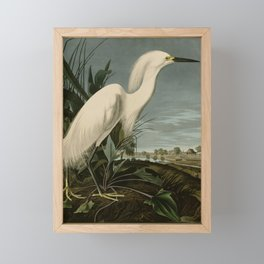 Snowy Heron or White Egret from Audubon Birds of America Framed Mini Art Print