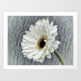 Fresh As A Daisy Art Print