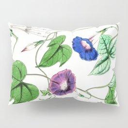 A Purging Pharbitis Vine in full blue and purple bloom - Vintage illsutration Pillow Sham