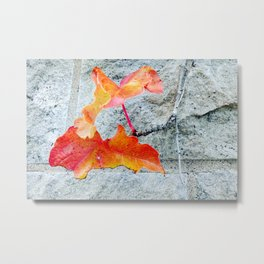 Red Leaves Growing by the Wall. Autumn, Fall Metal Print