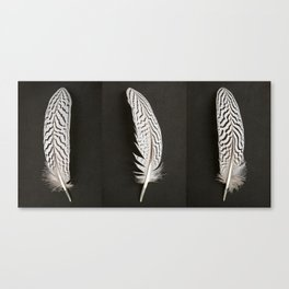 Silver Pheasant Feathers Canvas Print