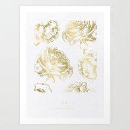 Gold Roses Art Print