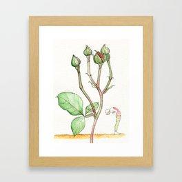 Rose Backbend Framed Art Print