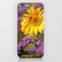 Sunflowers splendor in the fall iPhone Case