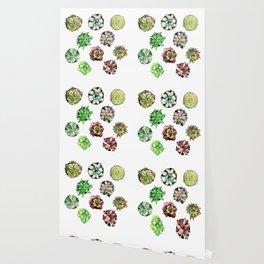 Succulent, Cactus, Desert Wallpaper