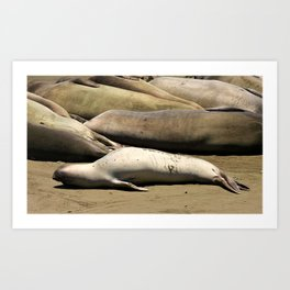 Elephant Seal Baby with Monday Feels Art Print
