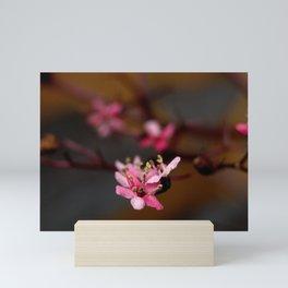 Sambucus Blossom Mini Art Print