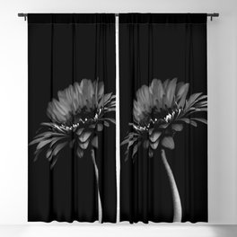 Daisy gerbera. Black and white Blackout Curtain