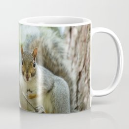 A wild squirel captured in a cold sunny autumn day Coffee Mug