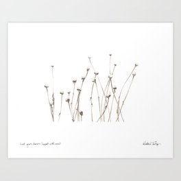 Last year's daisies, topped with snow Art Print
