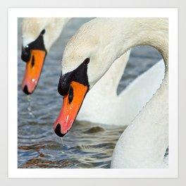 The Swan Lake Art Print