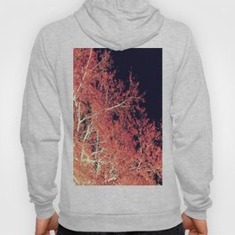 Inverted Tree Dark Night Hoody
