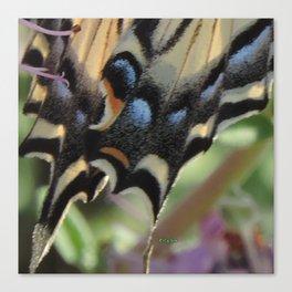 Detail of a Swallowtail Canvas Print