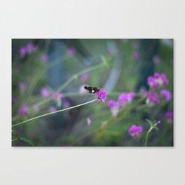 Butterfly On Purple Cornflower Canvas Print