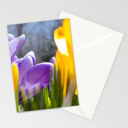 Field of Crocuses Stationery Cards
