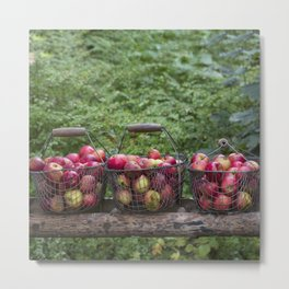 Autumn Apples Rustic Still Life Metal Print
