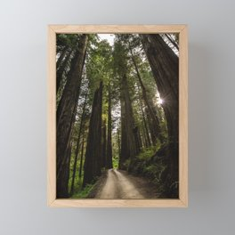Redwoods Make Me Smile - Nature Photography Framed Mini Art Print